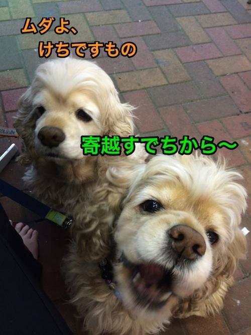 b0067012_12514738.jpg