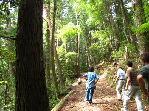 代々持続する自伐林家の森は、なぜ集中豪雨でも崩れないか_e0002820_17062823.jpg