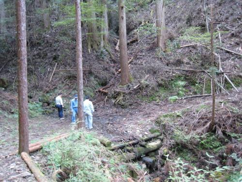 代々持続する自伐林家の森は、なぜ集中豪雨でも崩れないか_e0002820_17063049.jpg