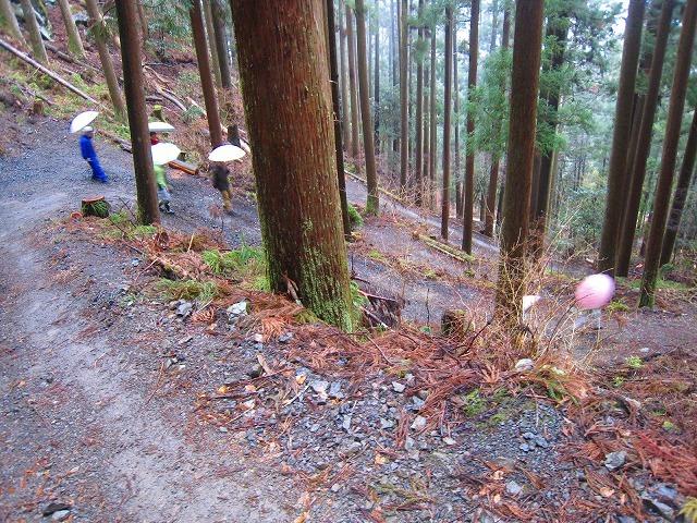 代々持続する自伐林家の森は、なぜ集中豪雨でも崩れないか_e0002820_17063194.jpg