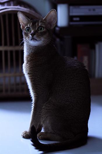 [猫的]かわいい?_e0090124_19492343.jpg