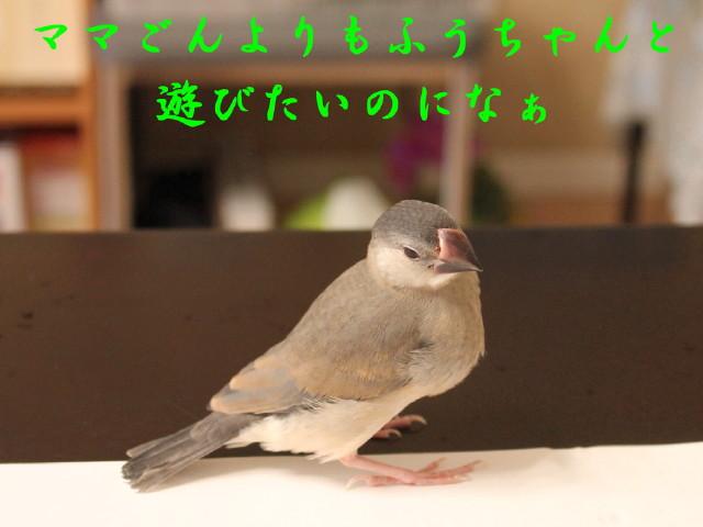 c0365734_23133259.jpg