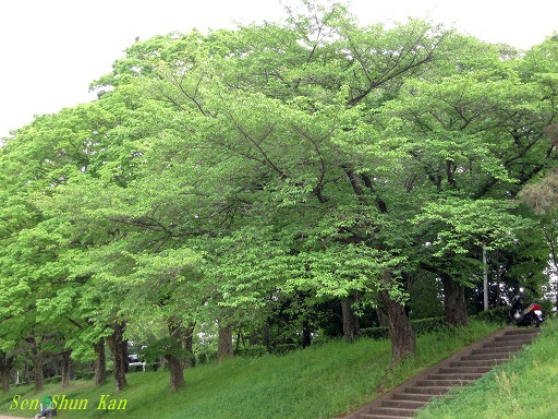 緑の賀茂川 2015年5月7日_a0164068_16143063.jpg
