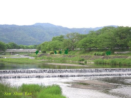 緑の賀茂川 2015年5月7日_a0164068_1614814.jpg