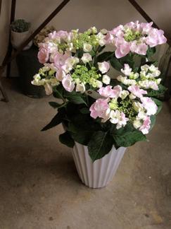 mothers day 鉢物さん_b0209477_13212112.jpg