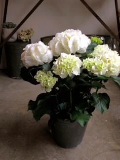mothers day 鉢物さん_b0209477_1321523.jpg