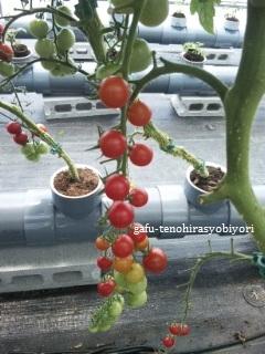 休日の話をふたつ(舞台『ウサニ』を観て/トマト、採ったどぉー!)_d0285885_14115835.jpg