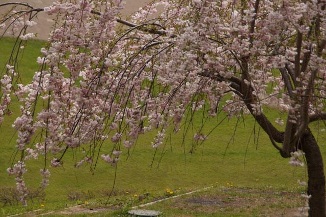 西野西公園_d0162994_1029244.jpg