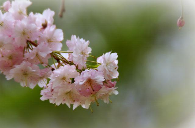 西野西公園_d0162994_10365793.jpg