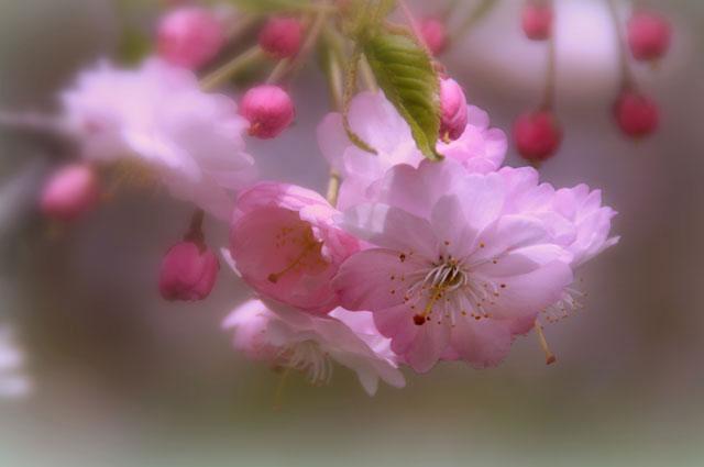 西野西公園_d0162994_10371587.jpg
