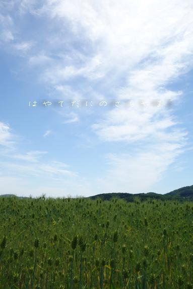 f0126896_20133672.jpg