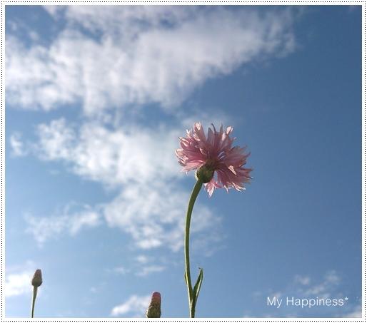 空に向かって_e0289203_8114818.jpg
