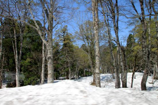 立山アルペンルート3 雪の大谷_e0048413_21322481.jpg
