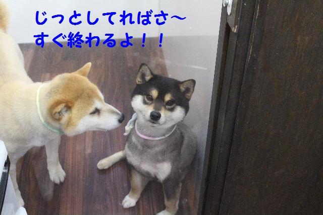 b0130018_21435472.jpg