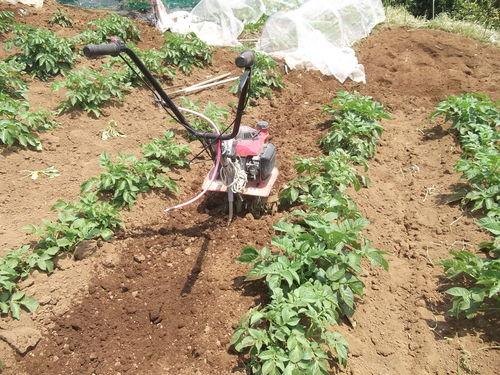 ジャガイモの土寄せ&支柱つくり_b0137932_2151961.jpg