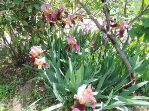 植物たち_e0099359_1319457.jpg