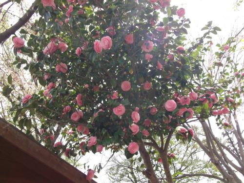 なんで…ピンクがいっぱい?_f0334882_13253354.jpg