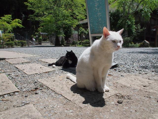 5月5日だよ☆_c0000685_1941193.jpg
