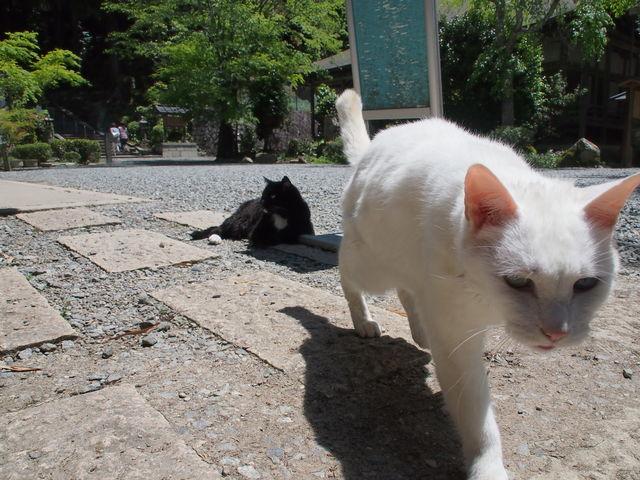 5月5日だよ☆_c0000685_194159.jpg