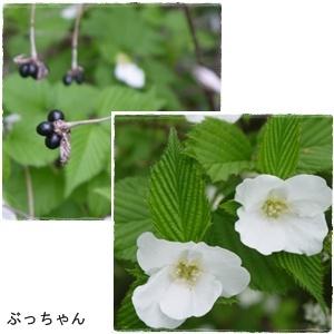 f0353990_20085190.jpg