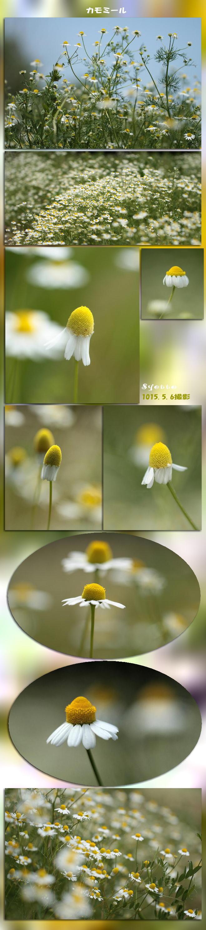 f0164592_216402.jpg