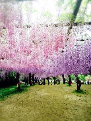 藤の花と花柄ロングシャツ_e0268298_1629375.jpg