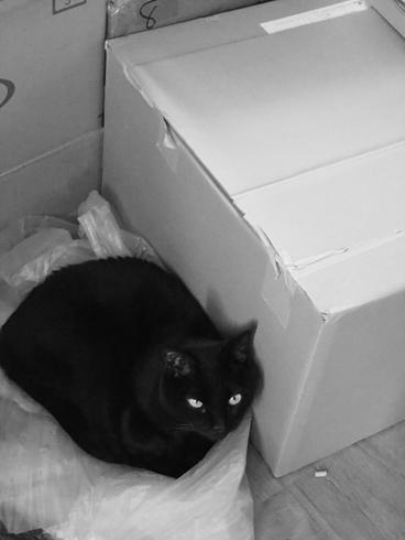 20150830 #黒猫_d0176130_1614266.jpg