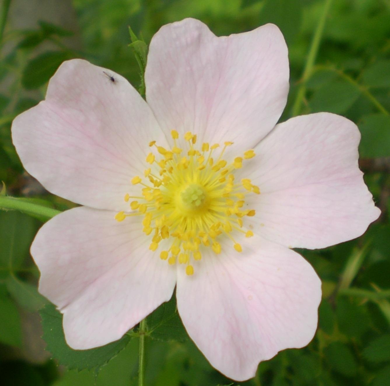バラは5月の風とともに_f0139333_21262897.jpg