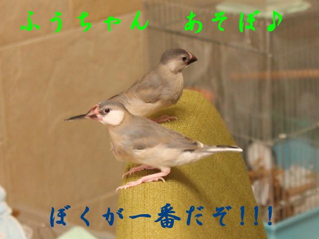 c0365734_22114048.jpg