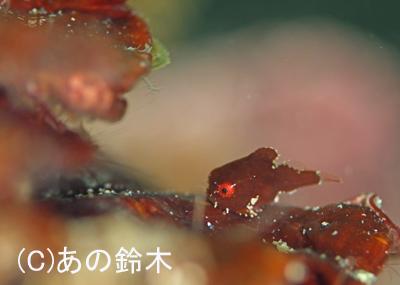 春の海_b0163039_1428125.jpg