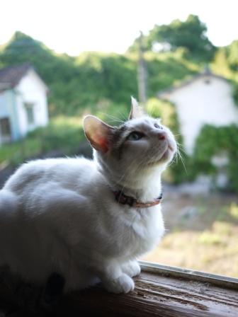 猫のお留守番 ガブくんダイヤちゃんメイちゃんフーちゃんクリちゃん編。_a0143140_21223076.jpg