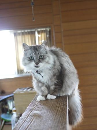 猫のお留守番 ガブくんダイヤちゃんメイちゃんフーちゃんクリちゃん編。_a0143140_21224183.jpg