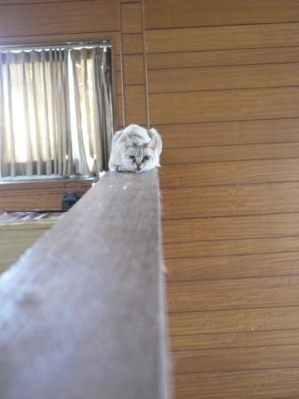 猫のお留守番 ガブくんダイヤちゃんメイちゃんフーちゃんクリちゃん編。_a0143140_21232264.jpg