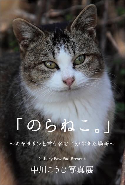 中川こうじ写真展 「のらねこ。」_c0194541_23115372.jpg