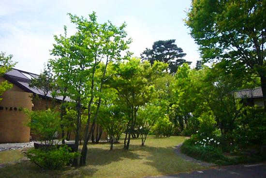 GWの小さな旅 癒しの「樹下美術館」_a0303951_20325432.jpg