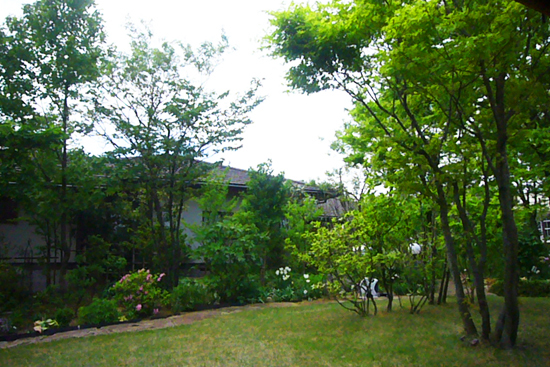 GWの小さな旅 癒しの「樹下美術館」_a0303951_2036019.jpg