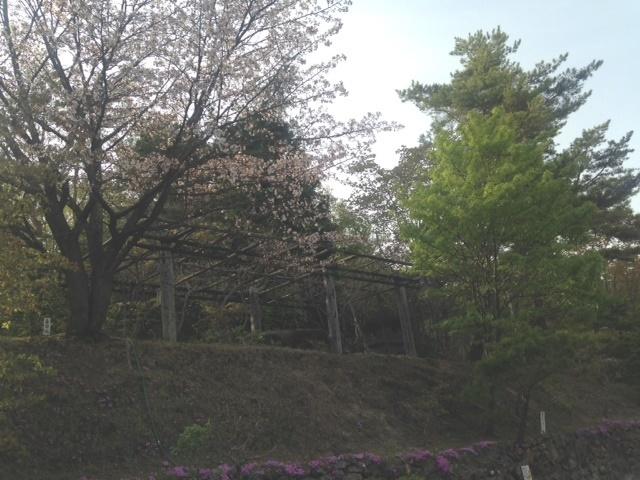 紅桜公園でジンギスカン_b0236665_23481606.jpg