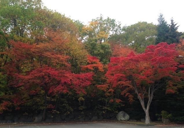 紅桜公園でジンギスカン_b0236665_23511898.jpg
