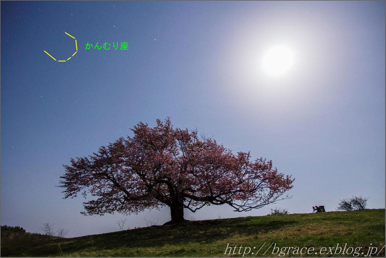 亀ヶ森の一本桜 月光写真_b0191074_2142558.jpg