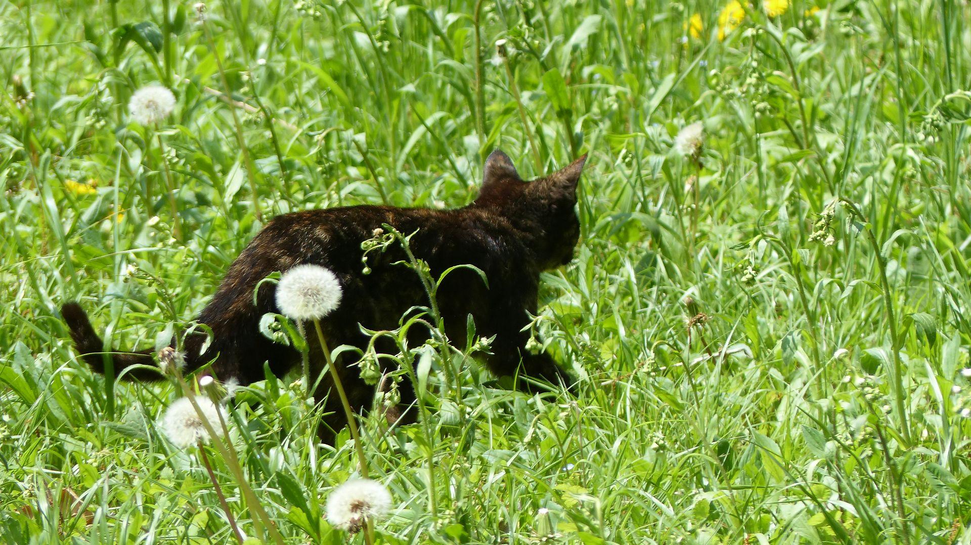 子供の森の一匹狼_a0185081_1527332.jpg