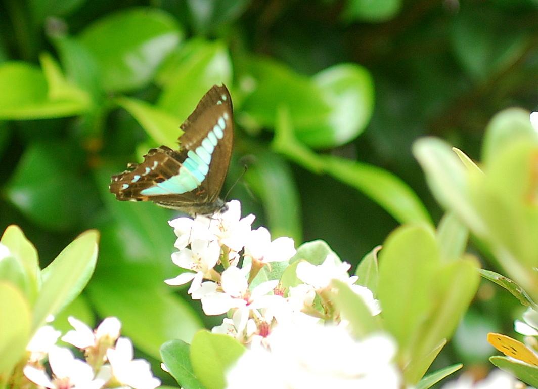 傷ついた蝶々_c0187781_23012239.jpg