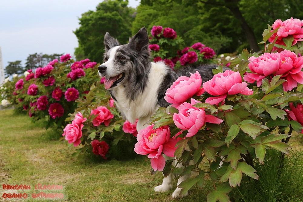 大きなお花~♪_b0192121_15581758.jpg