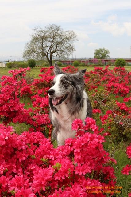 大きなお花~♪_b0192121_15584138.jpg