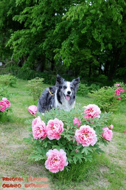 大きなお花~♪_b0192121_1558563.jpg