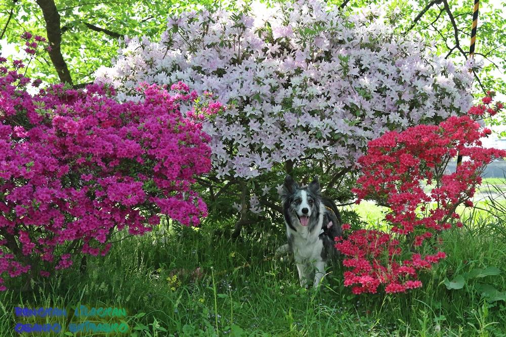 桜だけじゃないよ~♪_b0192121_1863554.jpg
