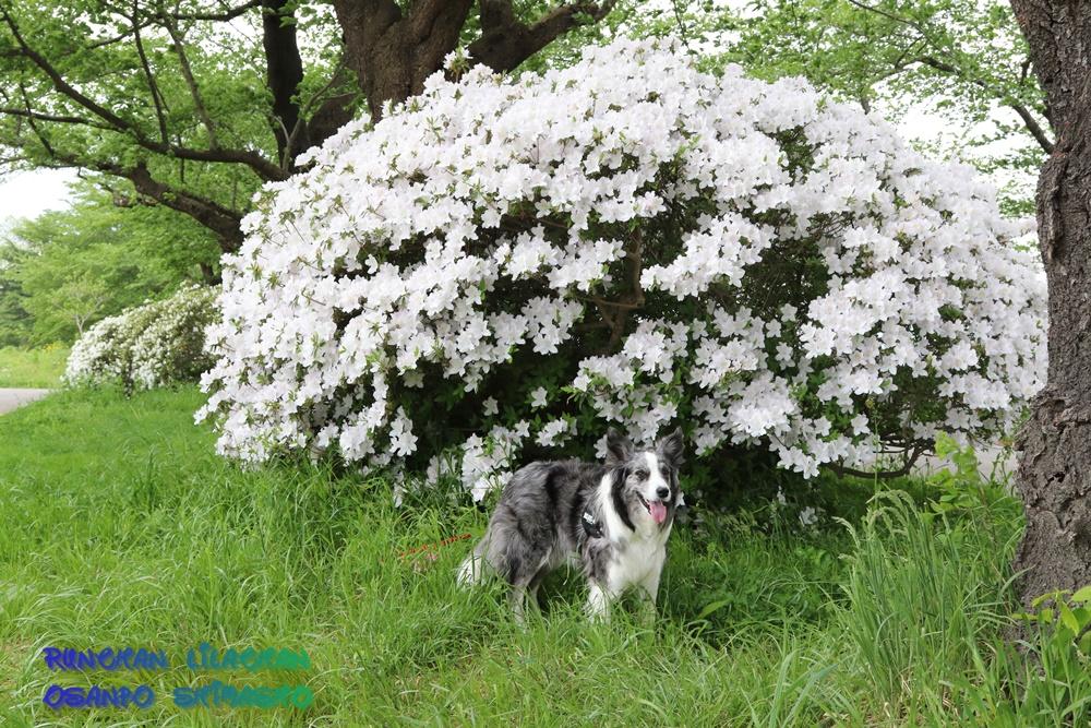 桜だけじゃないよ~♪_b0192121_1872090.jpg