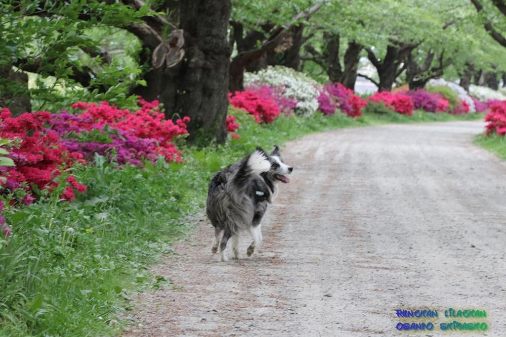 桜だけじゃないよ~♪_b0192121_1874144.jpg
