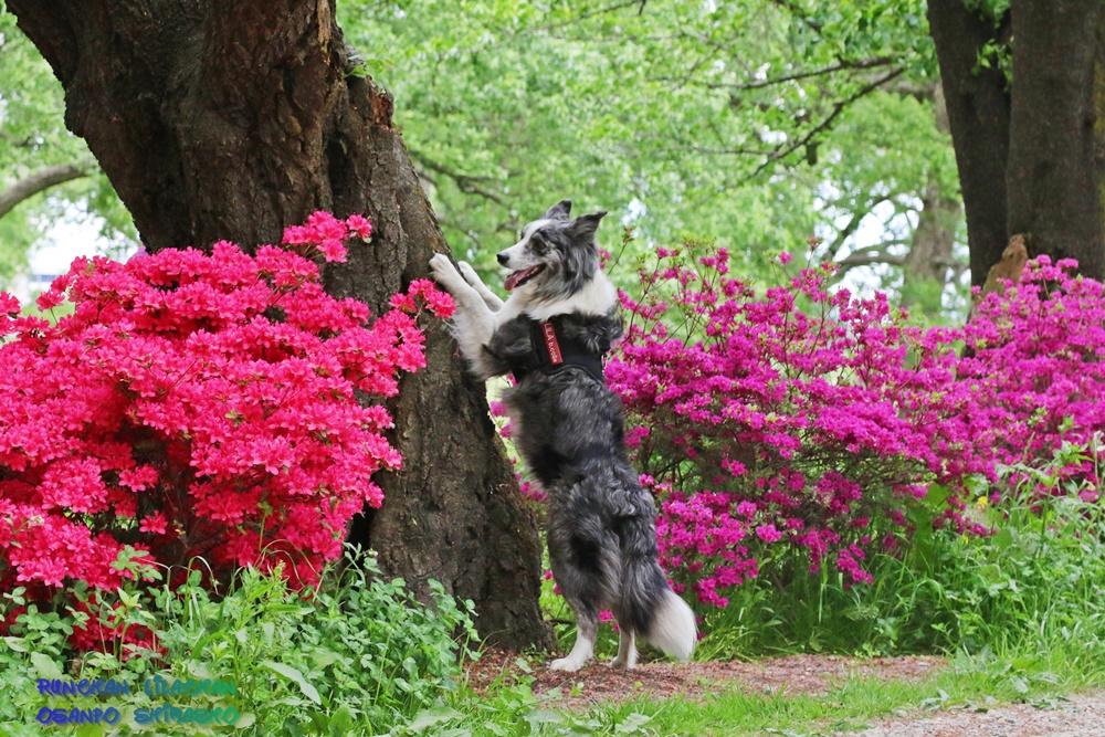 桜だけじゃないよ~♪_b0192121_1875163.jpg