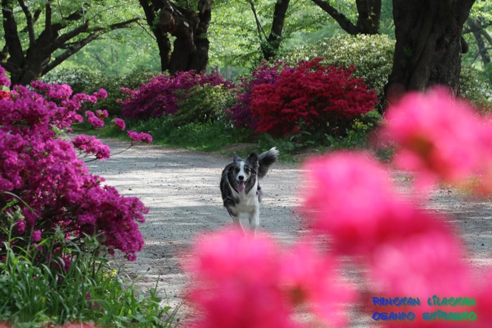 桜だけじゃないよ~♪_b0192121_187752.jpg