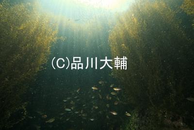 ワイド日和♪_b0163039_1558574.jpg